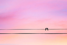 Two Birds On A Wire Or Electric Line On The Sunset Sky Background. Minimal. Family Concept