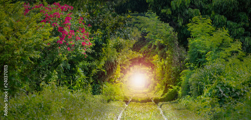 Foto auf Acrylglas Bestsellers Romantic railroad tree tunnel with the train and the light at the end of tunnel in Bangkok of Thailand