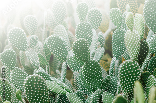 Photo of many small cactus in morning light