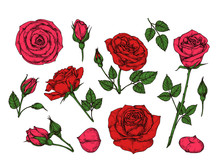 Red Rose. Hand Drawn Roses Gar...