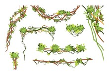 Jungle Vine Branches. Cartoon ...