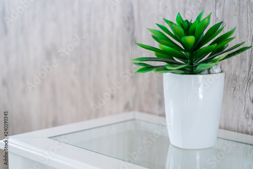 Foto op Canvas Bomen green plant in white pot with wood background