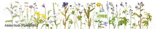 Obraz Background with watercolor flowers - fototapety do salonu