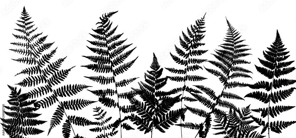 Fototapeta Background with fern leaves