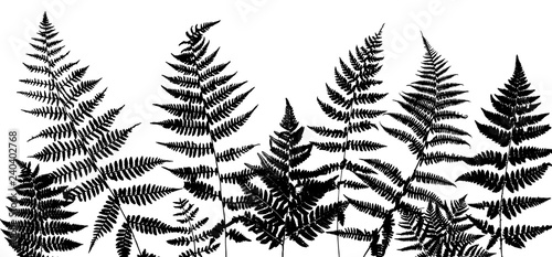 Fototapeta Background with fern leaves