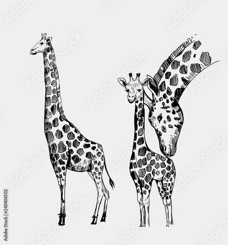 Fototapeta premium Szkic żyrafa. Ręcznie rysowane ilustracja przekonwertowana na wektor