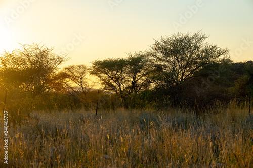 In de dag Zwavel geel 2018-10 Namibia