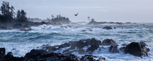 Waves Crashing On The Rocks With A Bird