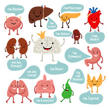 Human Internal Organs. Cartoon Anatomy Organs With Happy Smiles Vector Image, Healthy Spleen And Lungs, Liver And Heart Characters