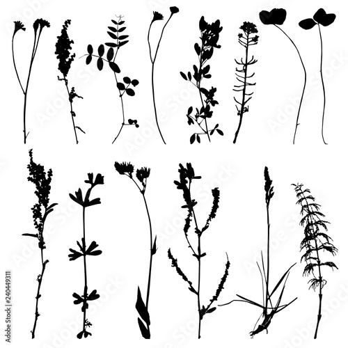 Photo Set of herbs and flowers silhouettes