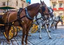 Horse Parking With Carts On The Central Square In Seville, Spain.