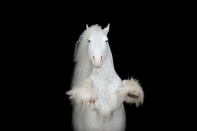 White Rearing Horse With Long Mane On Black Background Isolated, Front View