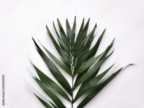 Canvas Prints Palm tree Texture for design. Can be used as background, wallpaper