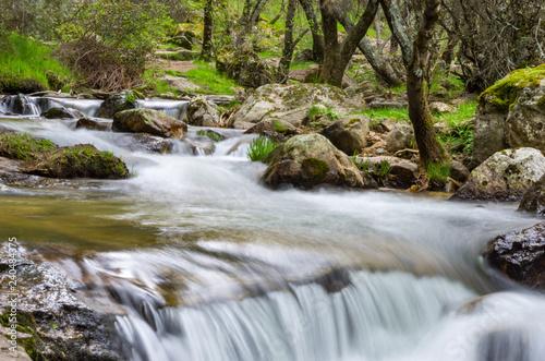 Plakat strumień w lesie z małym wodospadem na wiosnę