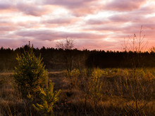 Sundown In A Heather Landscape...