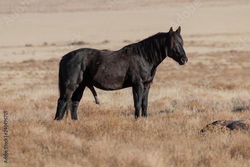 Beautiful Wild Horse in the Utah Desert