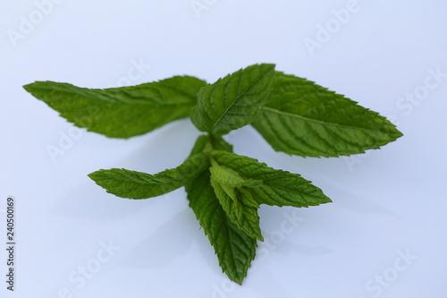 Fotografie, Obraz  Leaves fragrant with peppermint