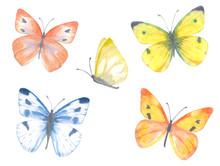 Colorful Collection Of Delicate Butterflies. Watercolor Painting