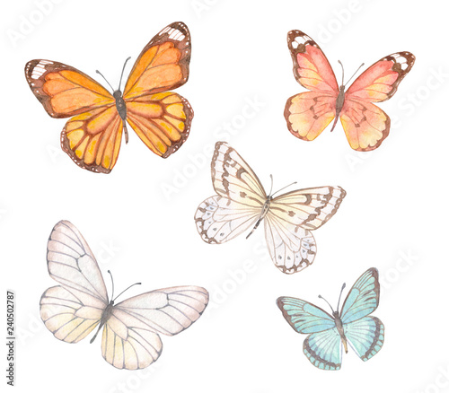 collection of delicate butterflies. watercolor painting Wallpaper Mural