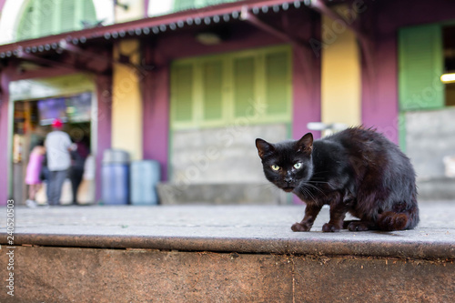 Photo  Beautiful cute cat on the street wild homeless
