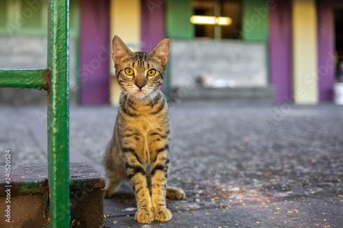 Photo  Beautiful cute cat on the street wild homeless