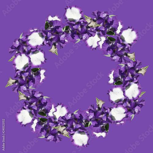 Circle of irises isolated on purple background