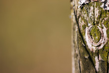Mossy Heavily Weathered Fencepost Macro.