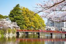 Around Odawara Castle In Cherry Blossoms Season