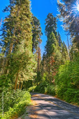 In de dag Verenigde Staten Forest of ancient sequoias in Yosemeti National Park.