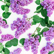 Floral pattern of lilac branches and leaves on white background. Flat lay, top view. Flower spring composition