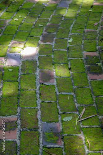Αφίσα  A moss covered pathway in a manicured garden