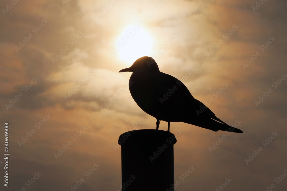 Silhouette Of A Seagull Against The Sky at Sunrise