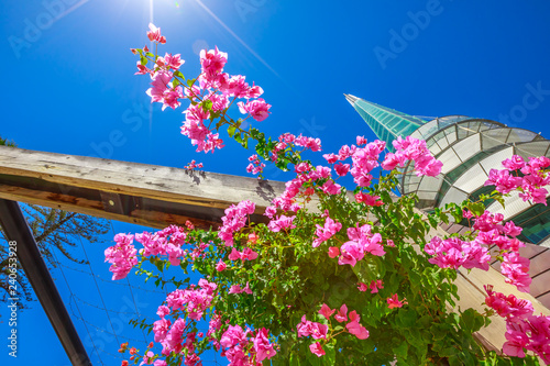 Staande foto Oceanië Perspective view of blooming bougainvillea and sunbeams with Bell Tower also called Swan Bell Tower on background. Barrack Square in Perth, Western Australia. Blue sky in a summer season.