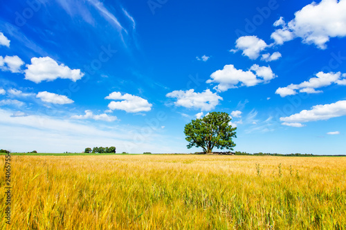 Picturesque summer landscape