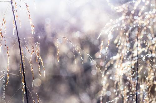 sucha-trawa-i-kloski-roslin-zbozowych-fotografia-makro-trawy
