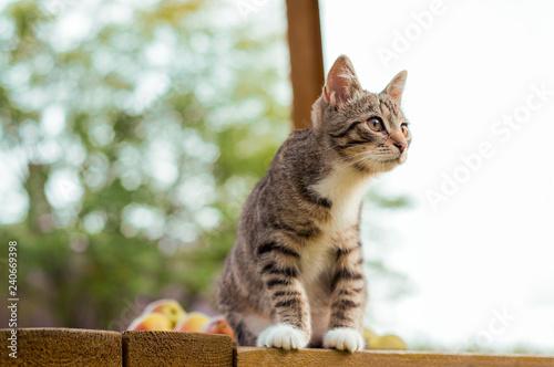 Fotografie, Obraz  Gray Cat Sit On Porch