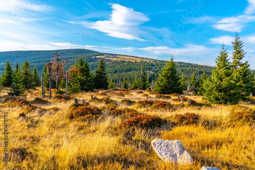 Fotografía  Green forest landscape with Velky Sisak and Vysoke Kolo Mountain, Giant Mountains, Krkonose, Czech Republic