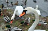 Fototapeta Zwierzęta - Wśród ptaków