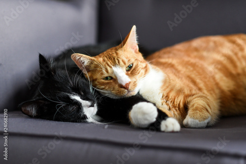 Fotografía  Two cats cuddling together on a chair at home.