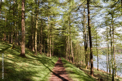 Fotografia  Sunny Trees With Path Leading Through