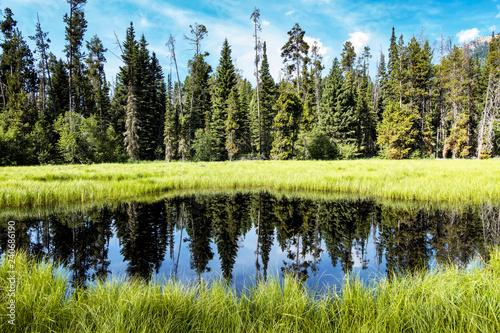 Fotografie, Obraz  Reflecting Pond with Forest