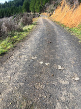 Mountain Road With Elk Deer Scat In Forest