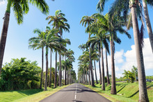 Capesterre Belle Eau, Guadeloupe, French West Indies, Famous Royal Palm( Roystonea Regia )fringed Road Named  Dumanoir Alley.