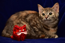 Kitten And Toy Cat
