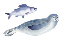 Watercolor Illustration. A Gray Seal And Fish. Splashes Sketch Of Wild Ocean North Animals
