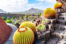 Beatiful View Of Cactus Garden...