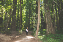 Blonde Female Tourists Walks Through A Forest Pathway Of Giant Trees In Redwood National Park In California