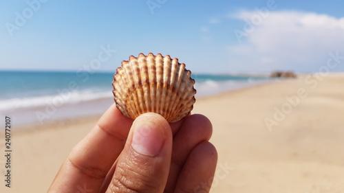 Fotografering  Mão segurando concha com o mar desfocado ao fundo