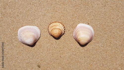 Fényképezés  Conchas na areia da praia em dia de sol