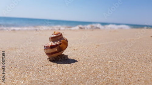 Fényképezés Concha enterrada na areia do mar com o oceano ao fundo
